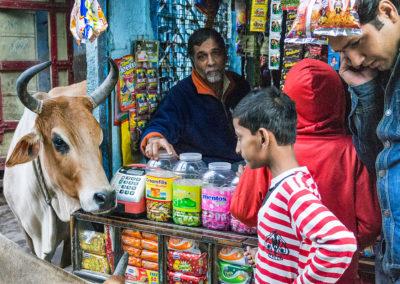 India, Rajasthan, Jodhpur, 2013