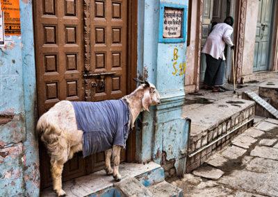 India, Uttar Pradesh, Varanasi, 2013